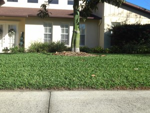 Close up shot of Floratam grass edged along side walk.