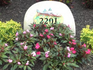 New Guinea Impatiens blooming in downtown Naples, FL