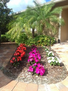 New Guinea Impatiens, Naples, FL