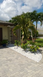Installed white marble rock along with Alamanda bush and Bottle Palm.